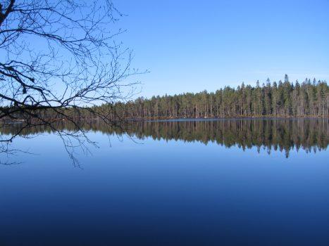 Finnskogen uten ulv og troll
